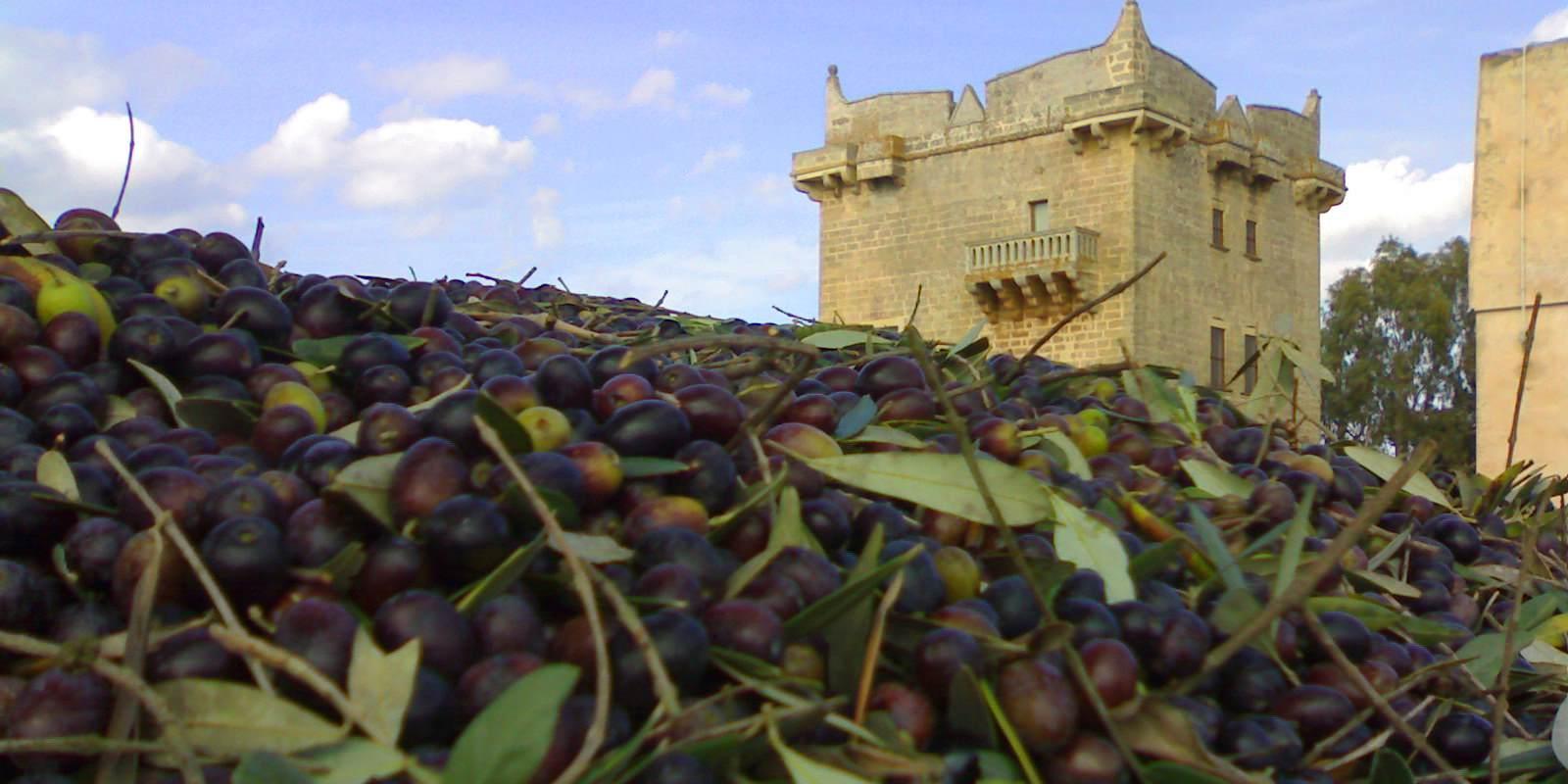 olive salento masseria melcarne