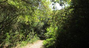 alberi lecceta rauccio