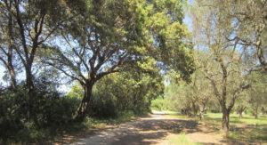 parco naturale Rauccio